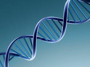 Влиянието на думите върху ДНК
